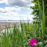 Vass på västra stranden
