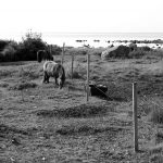 Hästhage vid havet i Villshärad