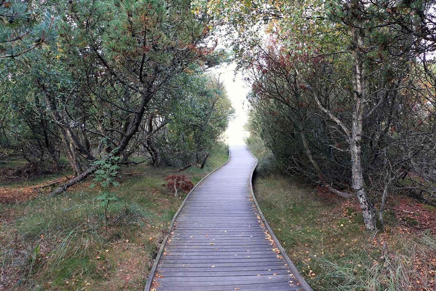 Spång genom skog mot hav Östra Stranden