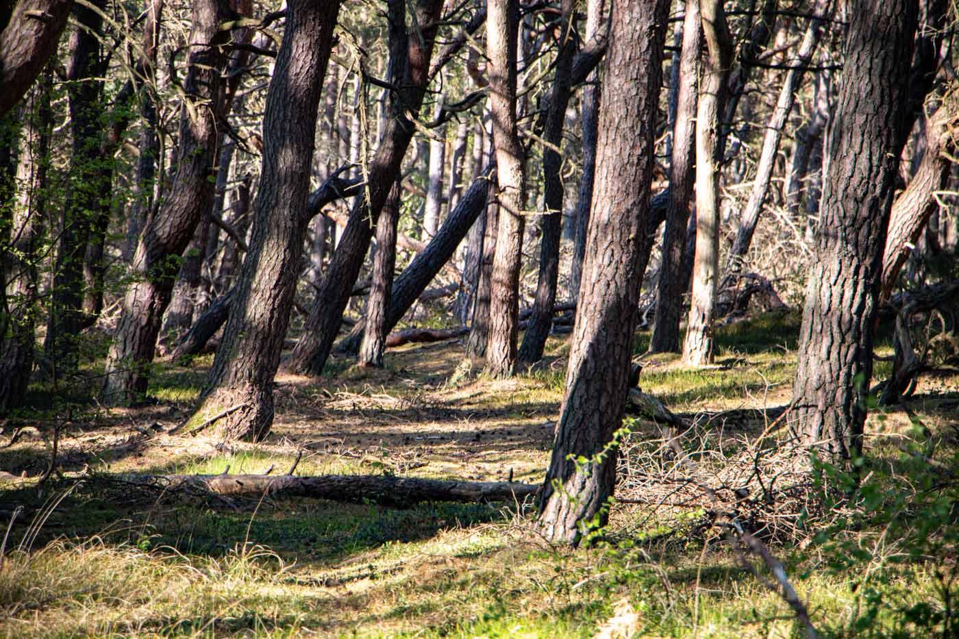 Skummeslöv naturreservat skog